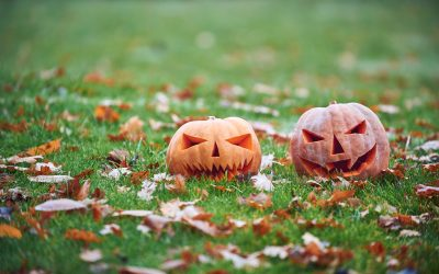 To Ensure Your Lawn is Ready, Follow These Fall Lawn Care Tips to Prepare for Spring